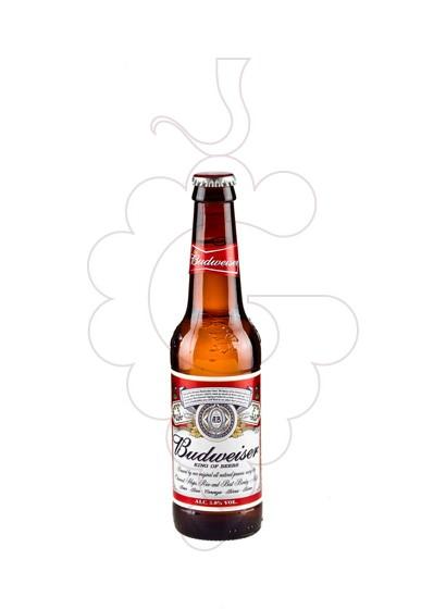Photo Beer Budweiser