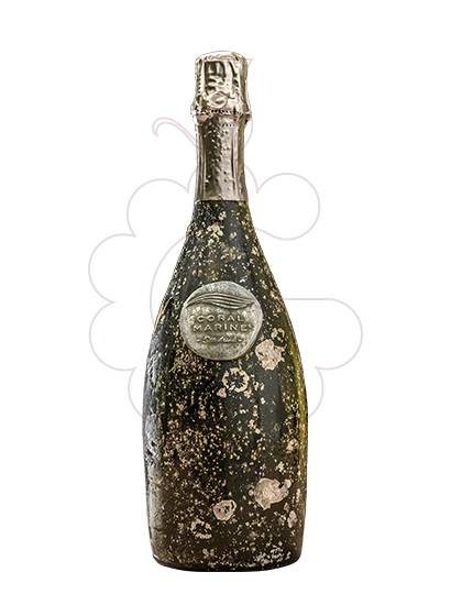 Photo Coral marine sea drink sparkling wine