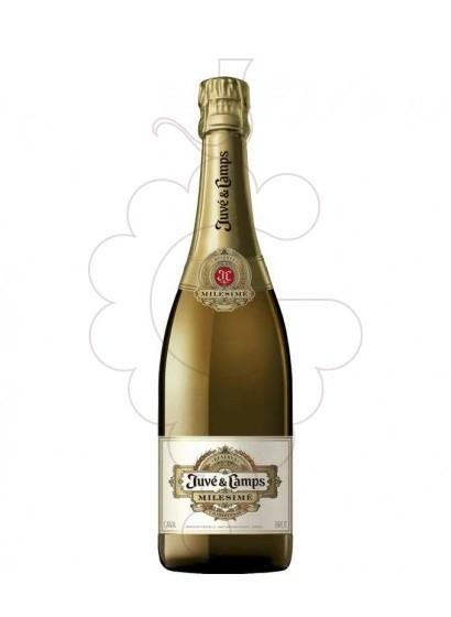 Photo Juve i Camps Milesime Magnum sparkling wine