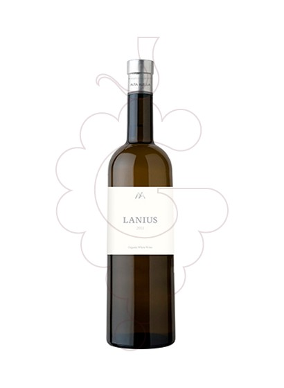 Photo Lanius white wine
