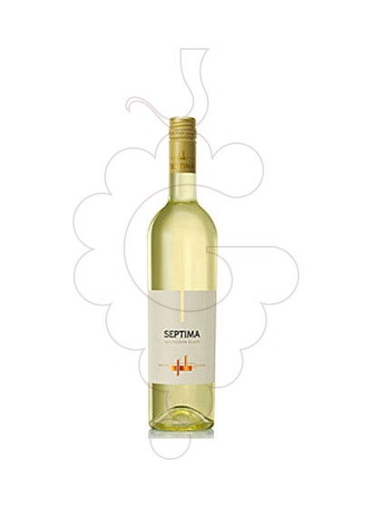 Photo Septima Sauvignon Blanc white wine