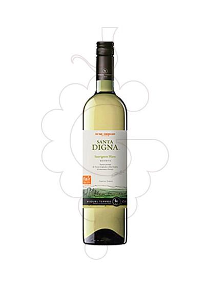 Photo Sta. Digna Xile Blanc Sauvignon white wine