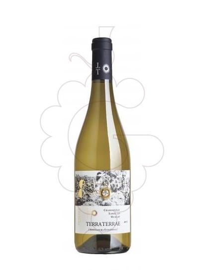 Photo White Terra Terrae white wine